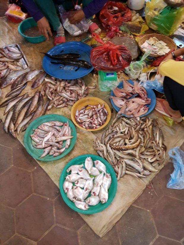 Fischmarkt Kambodscha