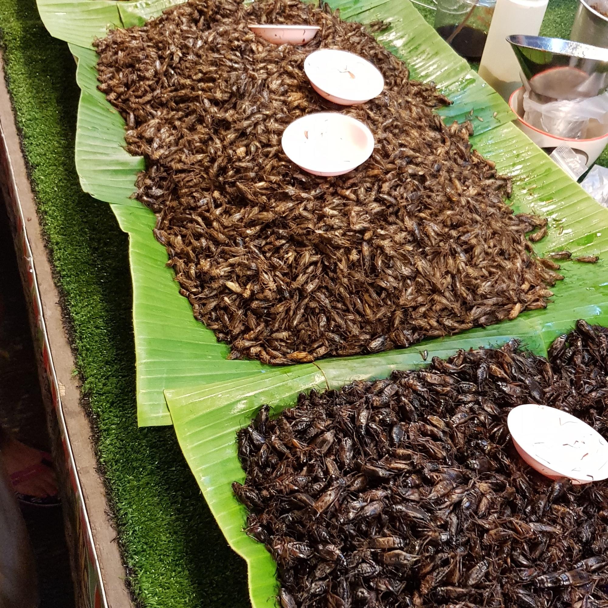 Insekten Nachtmarkt Phuket