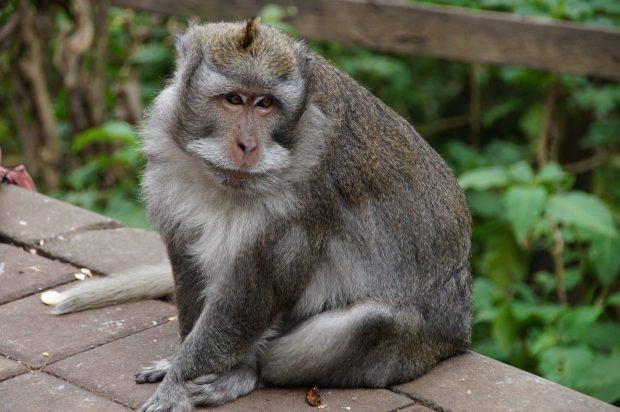 Sacred Mokey Forest Ubud