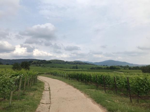 Wanderweg durch die Weinreben