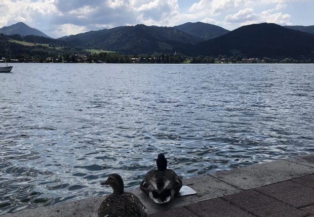 Enten am Tegernsee
