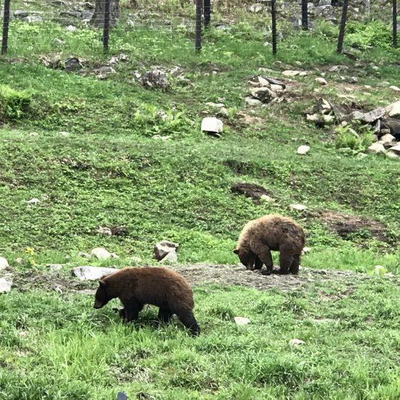 Parc Omega Kanada Bären